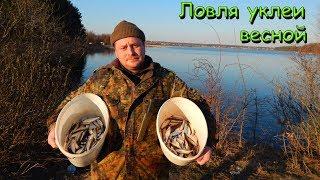 Как поймать уклейку в рыбном месте