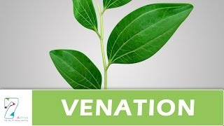 MORPHOLOGY OF FLOWERING PLANTS-VIDEOS-CH04-PART06-LEAF – VENATION