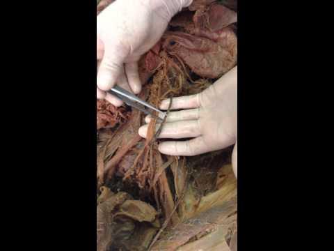 Examen Final practico anatomia 2014