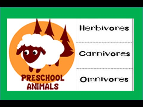 Herbivore Carnivore Omnivore Animals