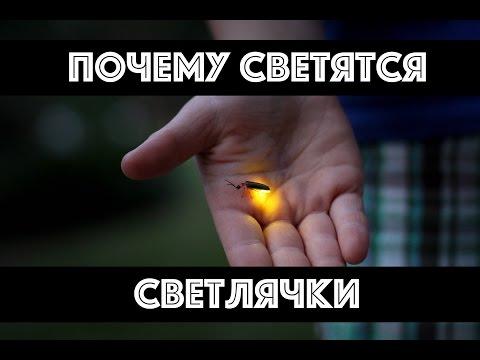 Почему светятся светлячки