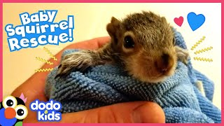 Tiniest Baby Squirrel Moves Into His Hero's Yard | Rescued! | Dodo Kids