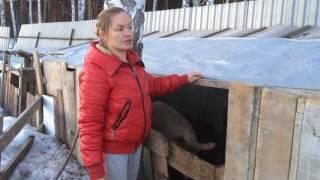 Содержание свиней зимой/жизнь в деревне