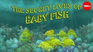 The secret lives of baby fish – Amy McDermott