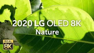 YouTube Video iCPtjovlxlA for Product LG SIGNATURE ZX OLED 8K TV by Company LG Electronics in Industry Televisions
