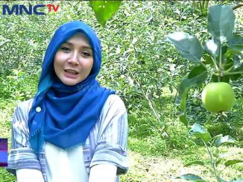 Video Khasiat Buah Apel dan Strawberry - Al Maidah (9/5)