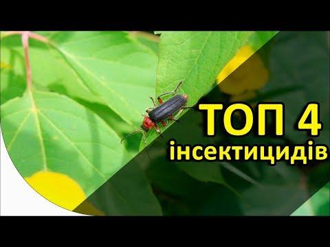 Топ 4 инсектицидных протравителей