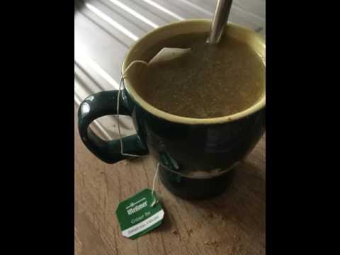 Come crescono sottili da caffè verde con zenzero