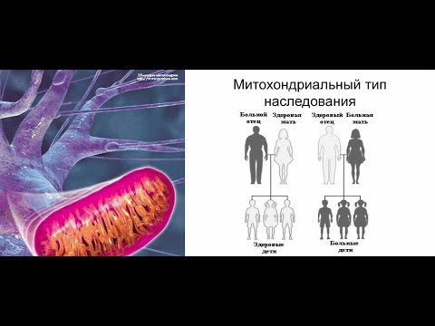 Митохондриальные болезни и материнское наследие. Источник: Кафедра генетики и цитологии.