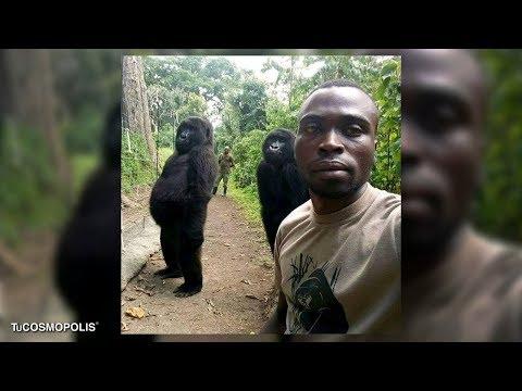 La Historia Detrás De La Selfie Con Los Gorilas