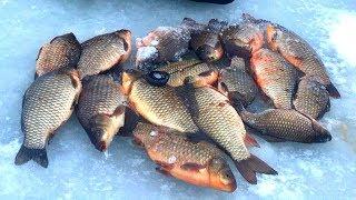 Рыбалка в златоусте форум 2020