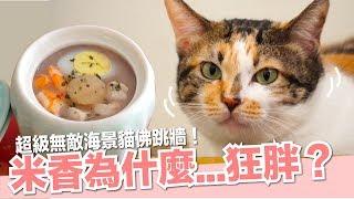 米香最近吃得不錯喔!貓佛跳牆!【貓副食食譜】好味貓鮮食廚房EP128