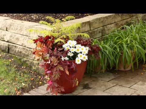 Tips to Save Money in the Yard and Garden