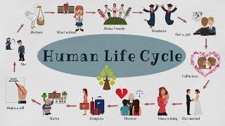 Human Life Cycle Vocabulary | Human Life Cycle in Less Than 3 Minutes