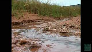 The Red River - Texas Parks and Wildlife [Official]