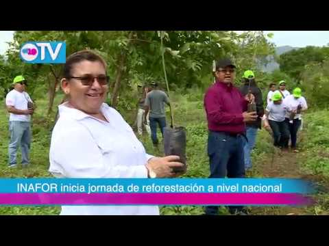 NOTICIERO 19 TV MARTES 09 DE JULIO DEL 2019