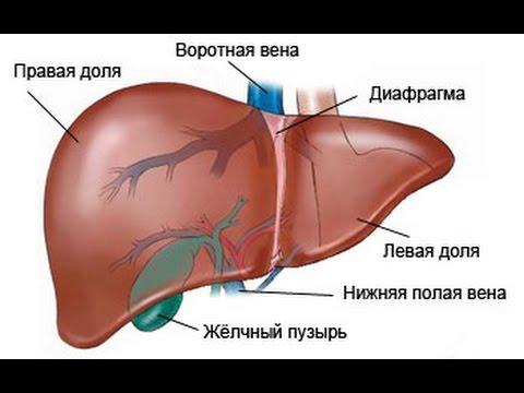 Овес для лечения гепатита