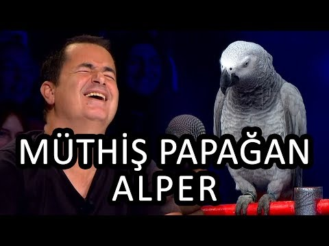 Papağan Alper Ve Cuma Kaya  -  Yetenek Sizsiniz Türkiye Yarı Final