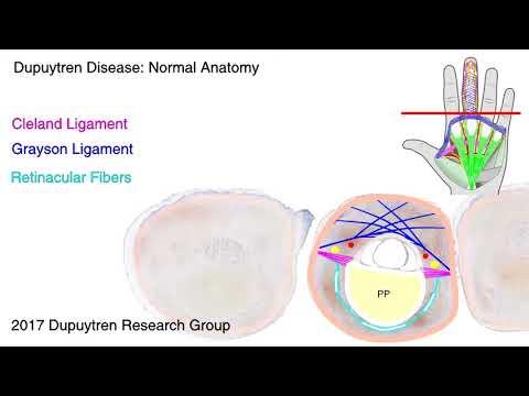 Fare una risonanza magnetica della colonna cervicale a Voronezh