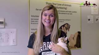 Toronto Humane Society - An Introduction