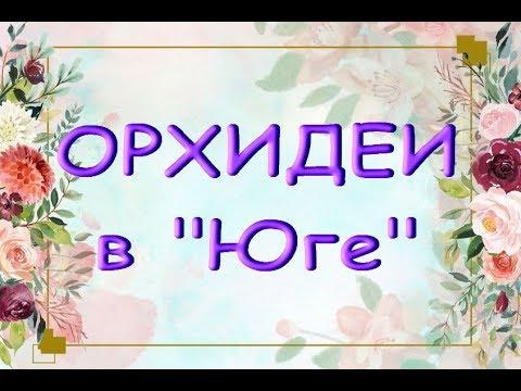 """ОРХИДЕИ:завоз в """"ЮГЕ"""",31.08.19.Приветы на Украину Татьяне и Валентине :)"""