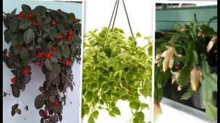 👉20 plantas pendentes - perfeitas para ambientes de meia sombra (confira)