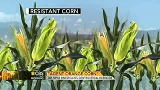 ベトナム戦争で使用された枯葉剤の耐性トウモロコシ論争