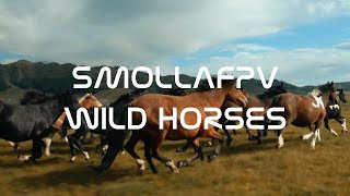 ДИКИЕ ЛОШАДИ АЛТАЙ/WILD HORSE RUNING FPV 4K