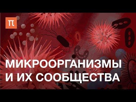 Микроорганизмы и их сообщества — курс Елизаветы Бонч-Осмоловской