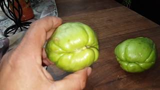 how to grow chayote squash in the high desert,  February 2018