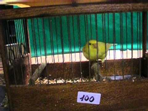 immagine di anteprima del video: MALINOIS WATERSLAGER 2005 DEL COMPIANTO AMICO CROATO DARKO KULIC