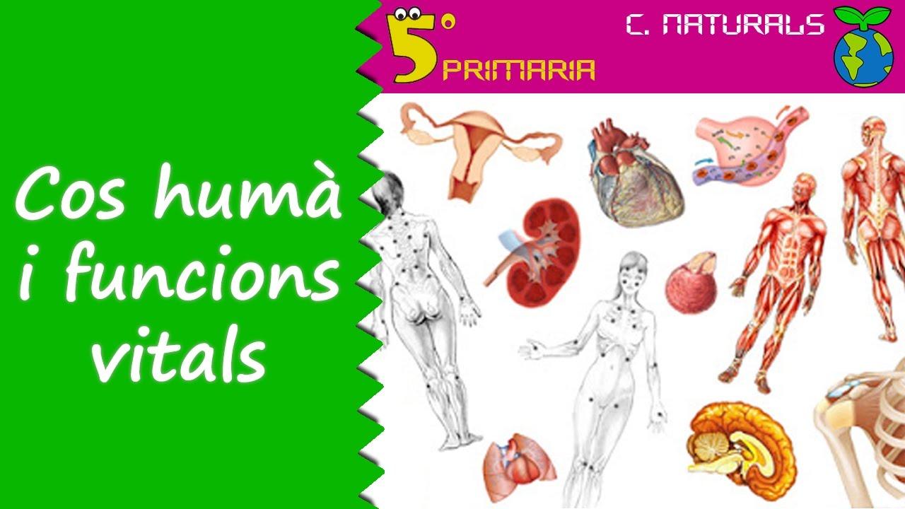 Cos humà i funcions vitals. Naturals, 5é Primària. Tema 4