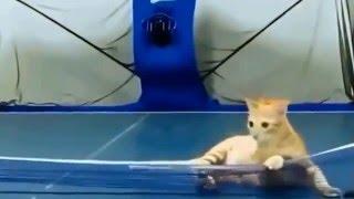 Кот играет в настольный теннис!