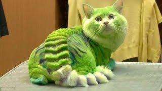 أخطر 10 سلالات قطط في العالم