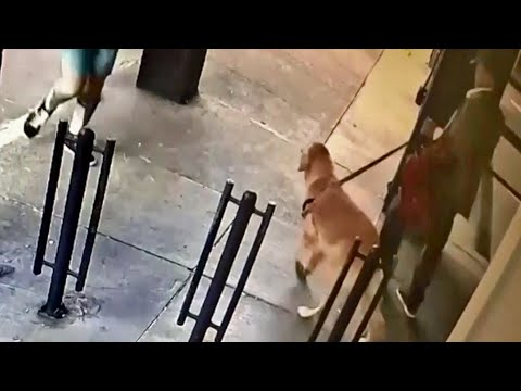 Caught on Camera: Family's Beloved Dog Stolen in S.F. Japantown