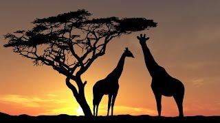 Животный Мир и Дикая Природа Африки. Документальный Фильм 2016