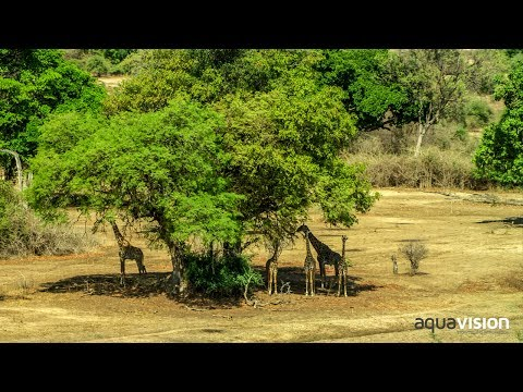 Kafue National Park - Zambia Tourism