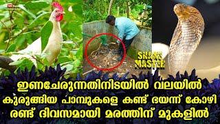 keralakaumudi.com - Kerala Kaumudi Online - Latest News | Breaking News | Audio News | Kerala News | India News | World News | Politics | Movies | Travel | Cartoons | Photogallery | Kerala Kaumudi Online