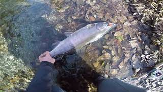 Fly fishing for Coho on the west coast of Vancouver Island BC