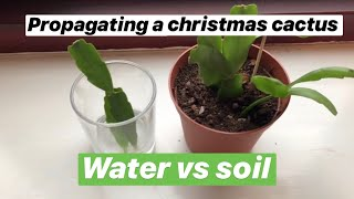 Propagating Christmas cactus water vs soil with updates