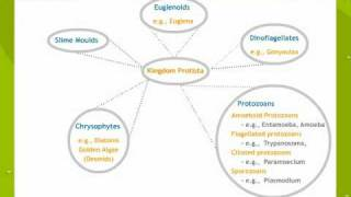 Biological Classification - Systematics