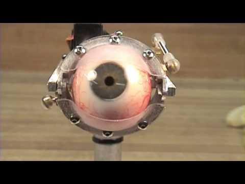 Animatronic Eyeballs Freak Me Out