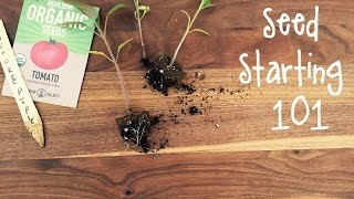 How-To Start Seeds for a Vegetable Garden | IN BETH'S GARDEN