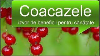 Coacazele - izvor de beneficii pentru sănătate - retete