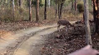 Achanakmar Tiger Reserves A Complete Jungle Safari