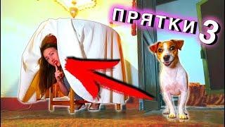 ИГРАЕМ в ПРЯТКИ В Доме Призраке с Собакой Джиной   Elli Di Pets