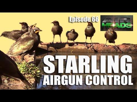 Airheads – Starling Airgun Control