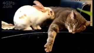 Коты - котики - собачки!!!