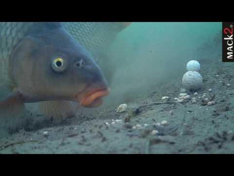 Oh un pesce grande che pesca senza confini