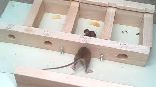 How Small A Hole Can A Mouse Get Through?  Experiments.